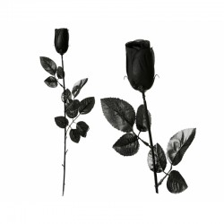 Rose noir 98023